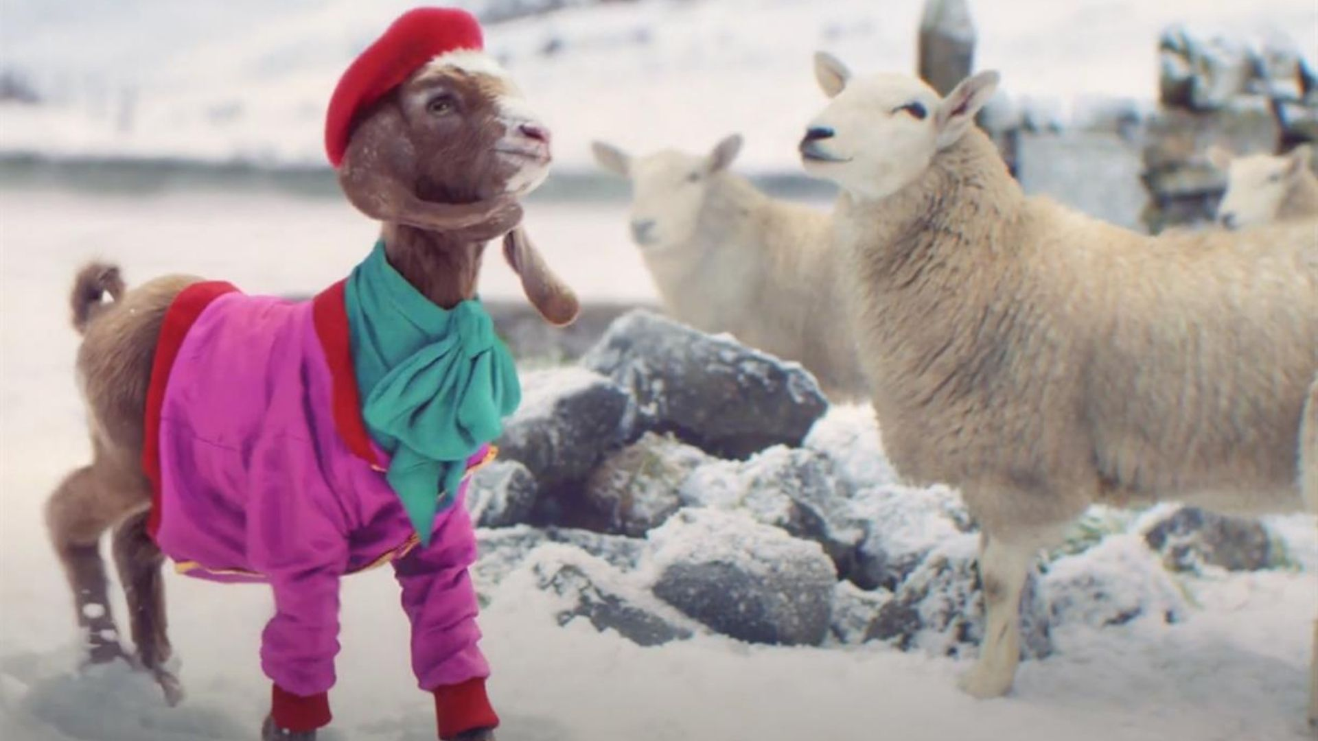 Still from the TK Maxx Christmas advert, featuring a stylish animated goat and a flock of sheep